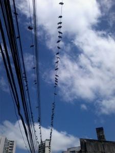 Varal de pombos no céu azul de Boa Viagem - SE