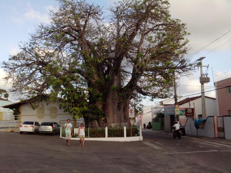 À direita do baobá se chega ao monumento à Nísia Floresta Brasileira Augusta - Fotos: JT