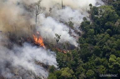 O fogo come a floreta - Foto:Greenpeace